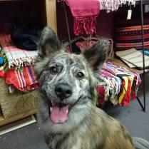 今日はレラちゃんのお店で打ち合わせでした♪ その間、レラちゃんは看板犬をしたり、足元でお昼寝したりして待っていてくれました(o^-^o) 今回は看板娘の笑顔でパチリ。