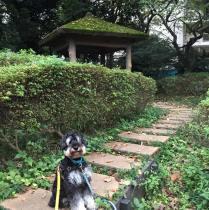 わんちゃんとのお散歩は、ふだん気づかない発見をよくします。