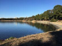 東京品川にある、「大井ふ頭中央海浜公園スポーツの森」で遊んできました♪森、なぎさ、広場、ドッグランと盛りだくさんなこの公園にポルトはテンションあがりまくっていました(^o^)http://puppybeans.tokyo/2015/01/09/odekake/