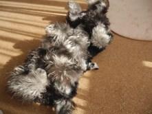 今日はPuppyBeansのひとコマをご紹介します。 この写真の正体を知りたい方は、ブログに遊びに来てくださいね♪ http://puppybeans.tokyo/2015/03/13/kyoushitu/