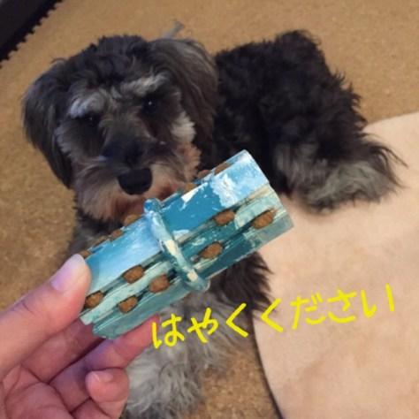 雨の日はコング!など良くお伝えしていますが、実際に使ってもなかなか遊んでくれない・・・というお話も良くお聞きます。 今回のブログはPuppyBeans定番のフードの詰め方などをお伝えします。ブログ更新しましたhttp://puppybeans.tokyo/2015/02/13/chiikugangu/