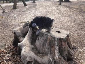 ブログ更新しました♪今回のブログは、品川区と目黒区の境にある、「林試の森公園」をレポートします。 自然が大好きなふじさき、しっかり癒されました(^∇^) http://puppybeans.tokyo/2015/03/03/rinshinomori/