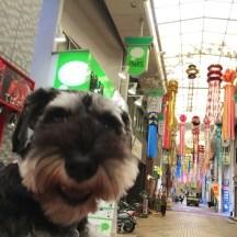 今日は、東急線、中延の商店街で七夕飾りをパチリ。 いつも賑やかな商店街ですが、開店前の静かな時間にカポネくんと社会化散歩しました(o^^o)♪