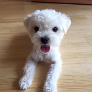 練習後にポーズを決めるなつめちゃんをパチリ。 今日はレッスンは「犬として間違っていないけど、私たちにはやめて欲しいな」を伝えていきました♪YesかNoの結果だけでなく、正しい経過もほめてあげるとわんちゃんに伝わりやすくなります(o^^o)
