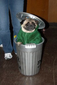 8 Best Dog Halloween Costumes On The Internet by Puppy In ...