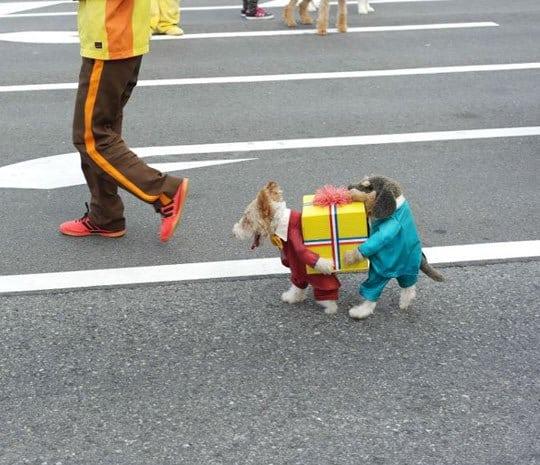 8 best dog halloween