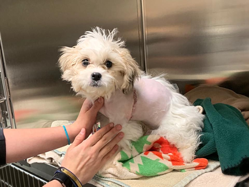 Rescues – Puppy Mill Rescue Team