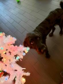 Jamie R- Hannah, deciding if she should eat the tree or not.