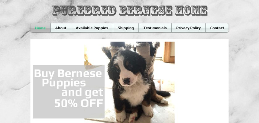 Purebredbernesehome5.net - Bernese Mountain Dog Puppy Scam Review