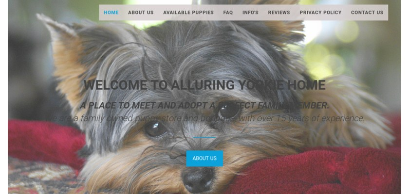 Alluringyorking.com - Yorkshire Terrier Puppy Scam Review