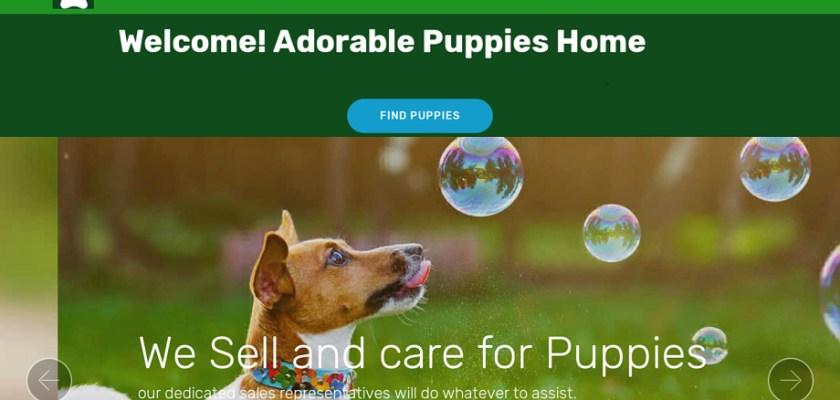 Adorablepuppieshome.com - English Bulldog Puppy Scam Review