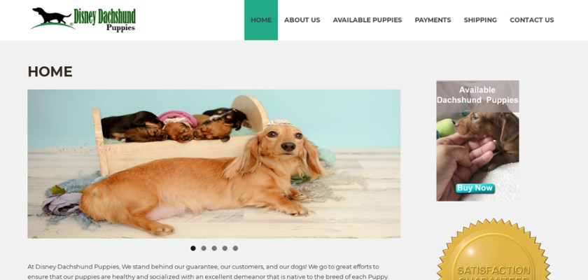Disneydachshundpuppies.com - Dachshund Puppy Scam Review
