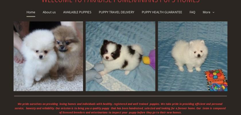 Paradisepomeranianpupshomes.com - Pomeranian Puppy Scam Review