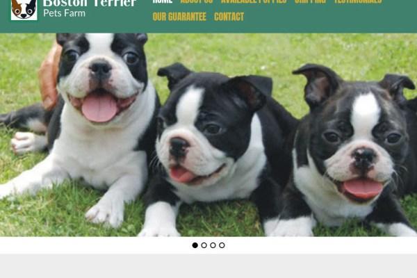 Bostonterrierpetsfarm.com - Boston Terrier Puppy Scam Review