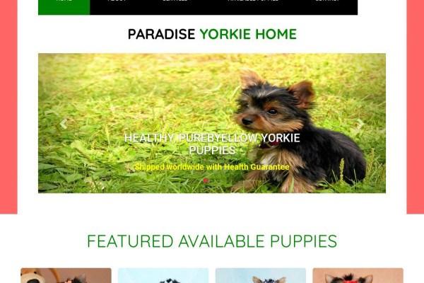 Emmayorkieshome.com - Yorkshire Terrier Puppy Scam Review