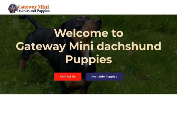 Gatewayminidachshundpuppies.com - Dachshund Puppy Scam Review