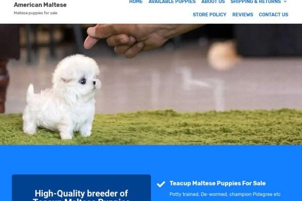 Americanamaltese.com - Maltese Puppy Scam Review