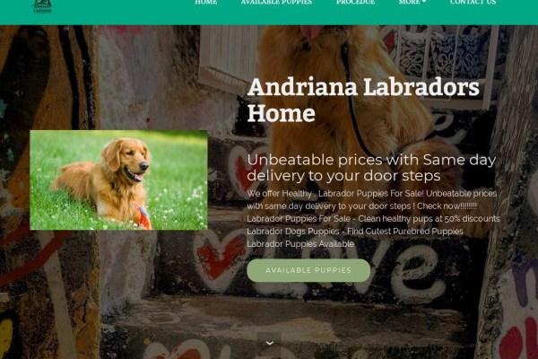 Andrianalabradors.com - Labrador Puppy Scam Review