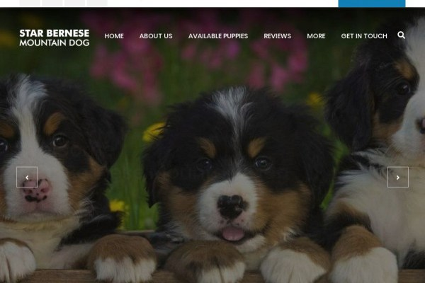 Starbernesemountaindog.com - Bernese Mountain Dog Puppy Scam Review