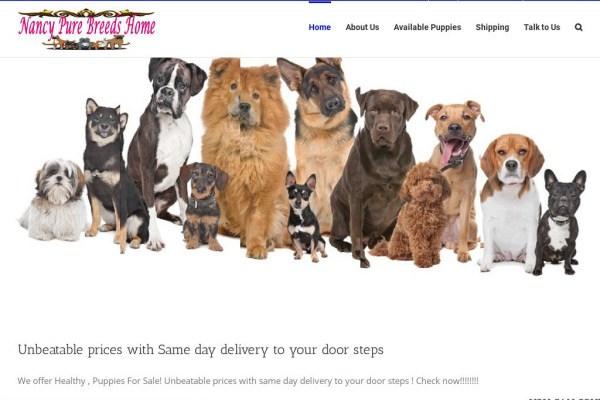 Nancypurebreeds.com - English Bulldog Puppy Scam Review