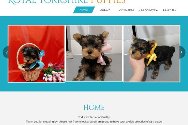Royalyorkie.com - Yorkshire Terrier Puppy Scam Review