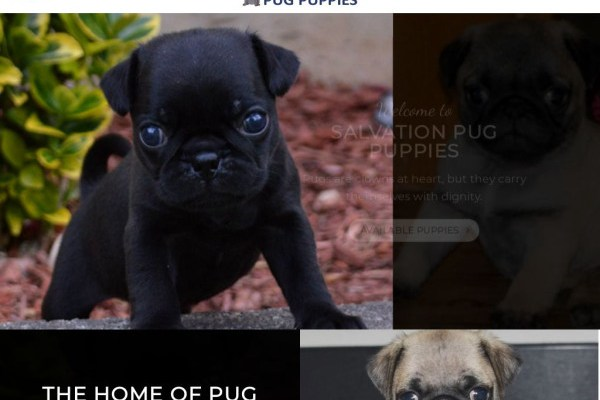Salvationpugpuppies.com - Pug Puppy Scam Review