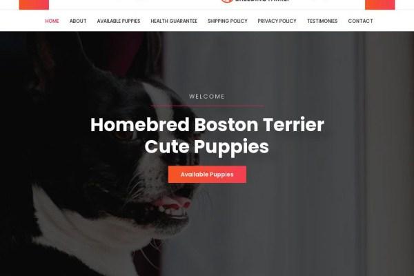 Bostonterrierbreedingfamily.com - Boston Terrier Puppy Scam Review