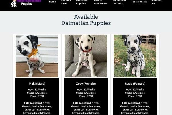 Russellsdalmatianpuppies.com - Labrador Puppy Scam Review