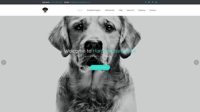 Homeraisedlabs.com - Labrador Puppy Scam Review