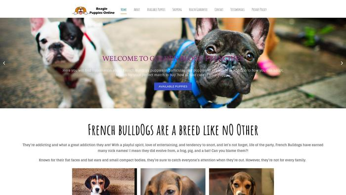Neddystunningbostonterrierpuppiesforsale.com - Terrier Puppy Scam Review