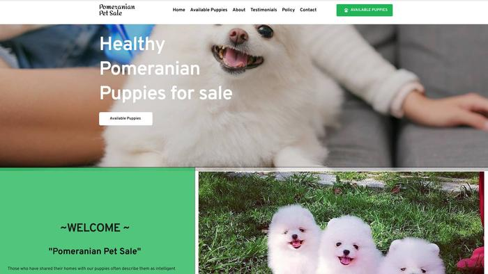 Pomeranianpetsale.com - Pomeranian Puppy Scam Review