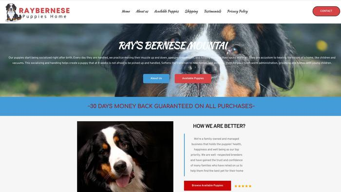 Raybernesepup.com - Bernese Mountain Dog Puppy Scam Review