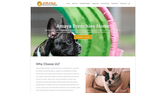 Amayafrenchies.com - French Bulldog Puppy Scam Review