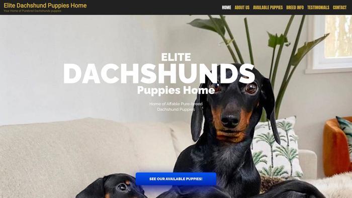 Elitedachshundpuppieshome.com - Dachshund Puppy Scam Review