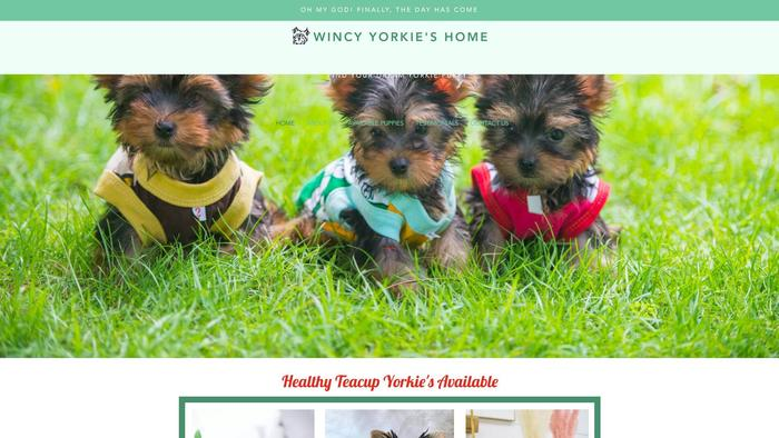 Wincyyorkieshome.com - Yorkshire Terrier Puppy Scam Review