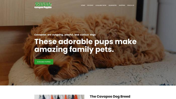 Billittlecavapoopuppies.com - Cavapoo Puppy Scam Review