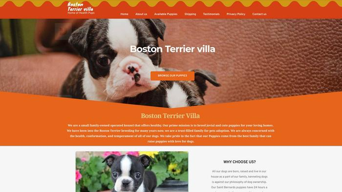 Bostonterriervilla.com - Boston Terrier Puppy Scam Review