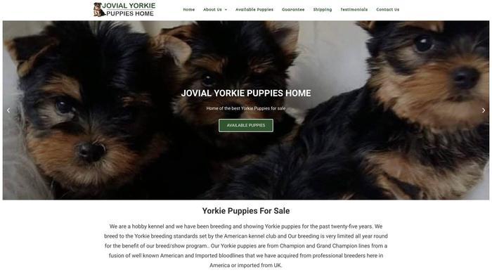 Jovialyorkiepuppieshome.com - Yorkshire Terrier Puppy Scam Review
