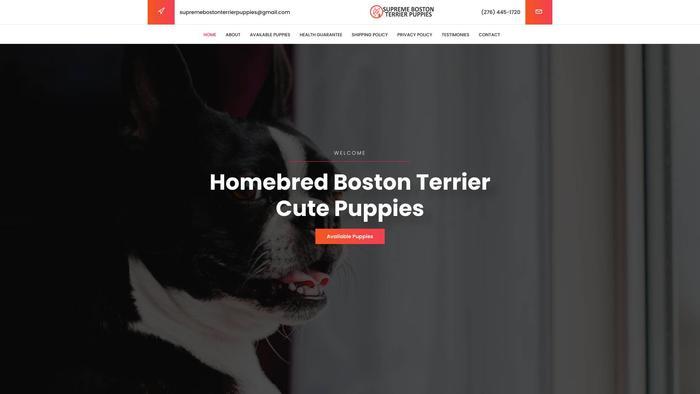 Supremebostonterrierpuppies.com - Boston Terrier Puppy Scam Review