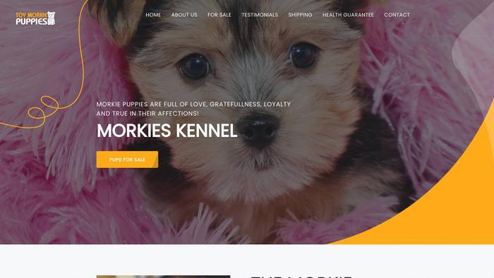 Toymorkiepuppies.com - Yorkshire Terrier Puppy Scam Review
