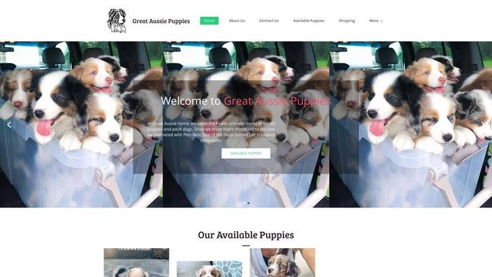 Greataussiepuppies.com - Australian Shepherd Puppy Scam Review