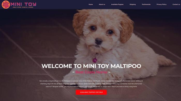 Minitoymaltipoocoatshome.com - Maltipoo Puppy Scam Review