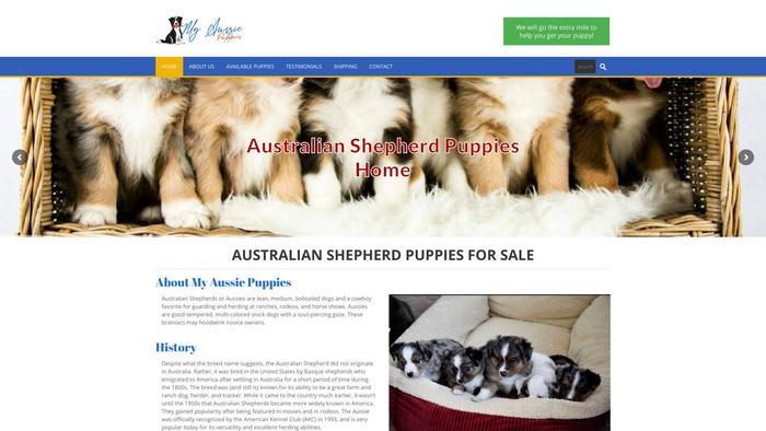 Myaussiepuppieshome.com - Australian Shepherd Puppy Scam Review