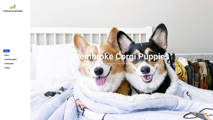 Pembrokecorgipuppies.com - Corgi Puppy Scam Review