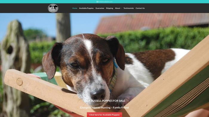 Royaljackrt.com - Jack Russell Terrier Puppy Scam Review