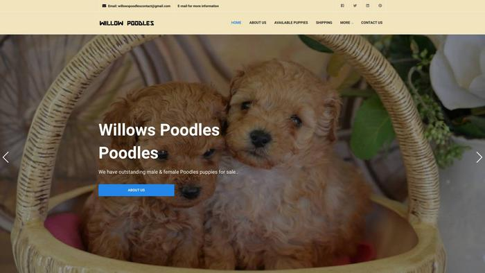 Willowpoodles.online - Poodle Puppy Scam Review