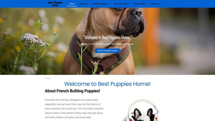 Bestpuppies-home.com - French Bulldog Puppy Scam Review