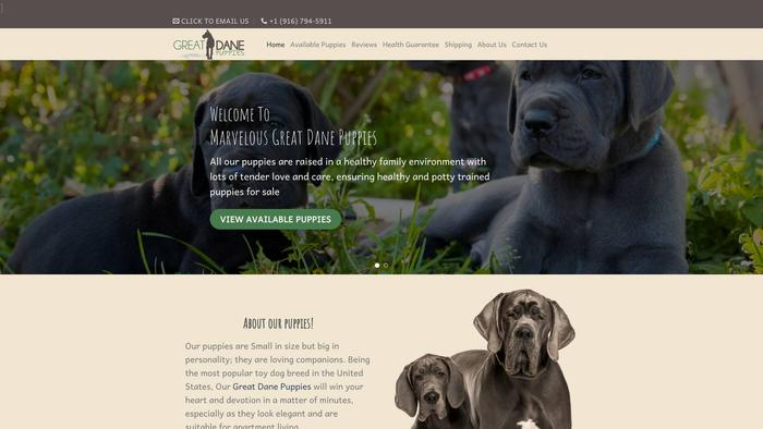Marvelousgreatdanepuppies.com - Great Dane Puppy Scam Review