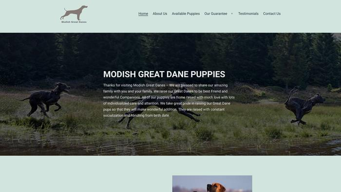 Modishgreatdane.com - Great Dane Puppy Scam Review
