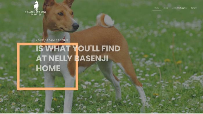 Nellybasenjipuppies.com - Basenji Puppy Scam Review